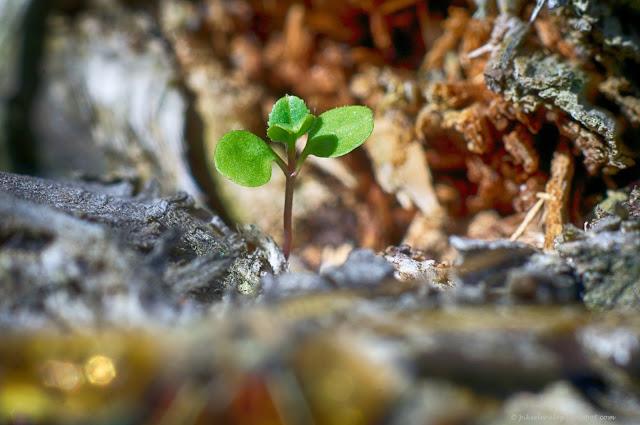 roślinka, studnia, przyroda, zielona, rosnę, wiatr, woda