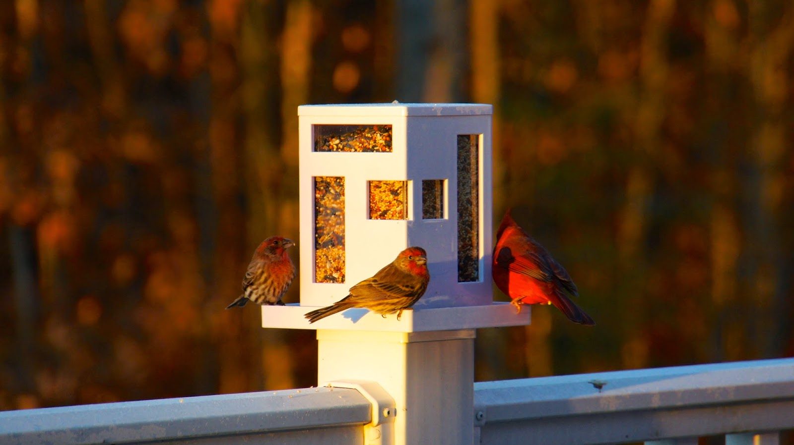 food fashion home modern bird feeder update - last november we decided it was time to bring some colorful wildlife witha modern bird feeder to the back deck during the cold months and boy didit