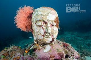 Buddha Face, Underwater Temple Garden