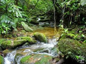 Queremos um plano nacional para proteção de florestas