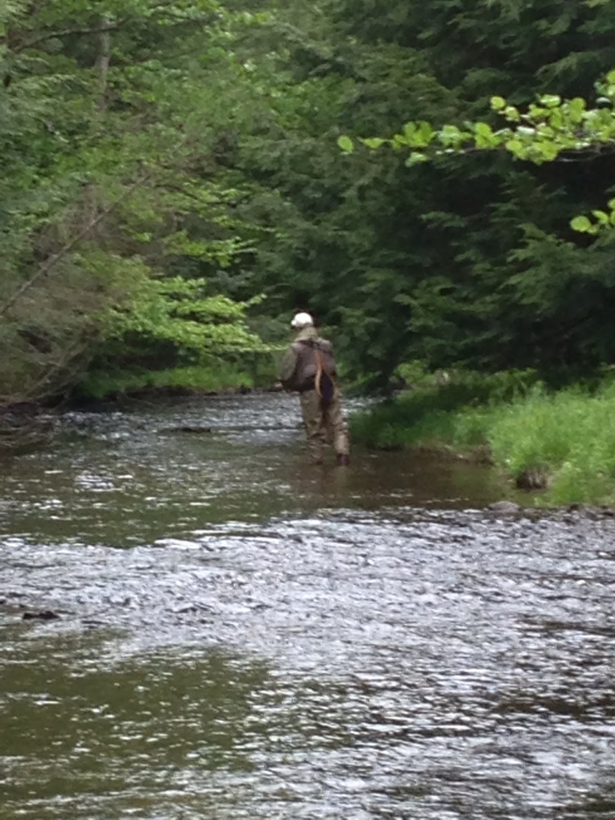 Brookies and bronzebacks white deer creek pa 24 may for Deer creek fishing