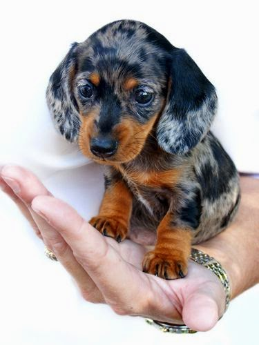 Top 5 Stubborn Dog Breeds