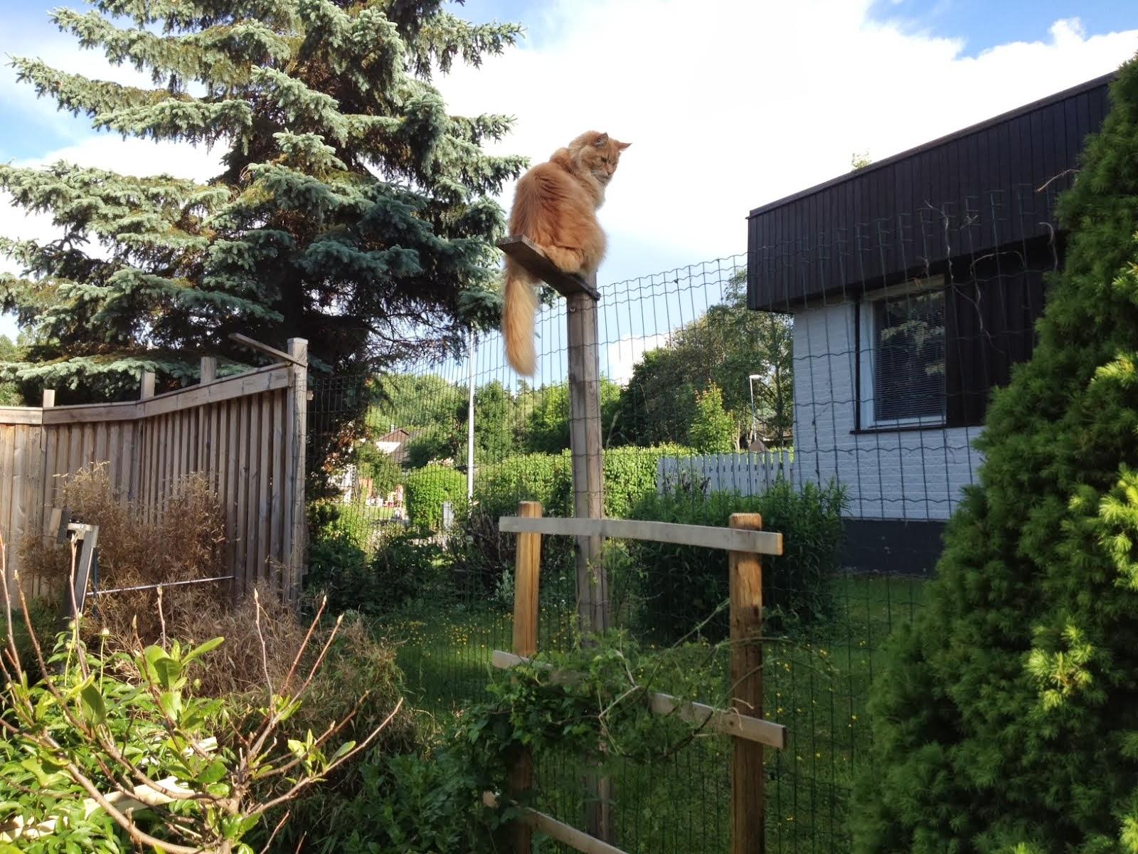 Zammy har börjat klättra igen
