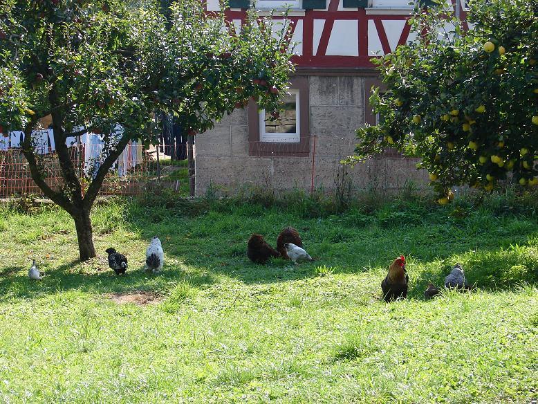 Hühnerhotel Hohenlohe