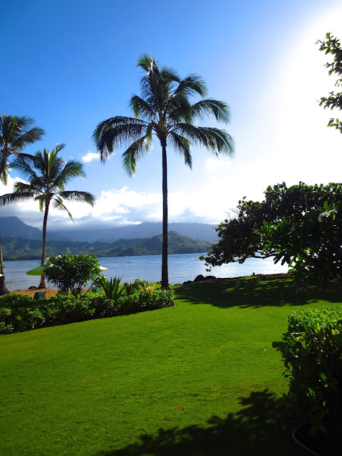 palm tree st regis hotel hanalei bay princeville kauai hawaii lawn ocean view