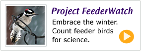 Join me on Project FeederWatch