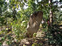 Nine megalithic graves discovered in Mysore district