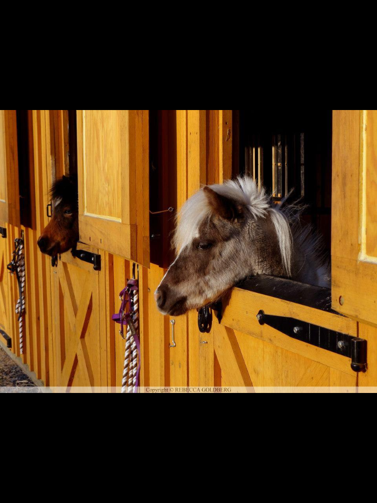 Miniature Horse Barns