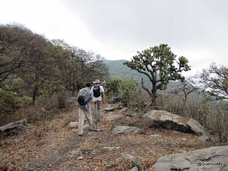 Caminando sobre la Sierra del Tecuán, cerca a la Sierra del Travesaño