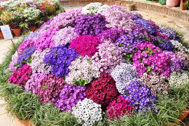 28th Garden Tourism Festival: Attractions of colour