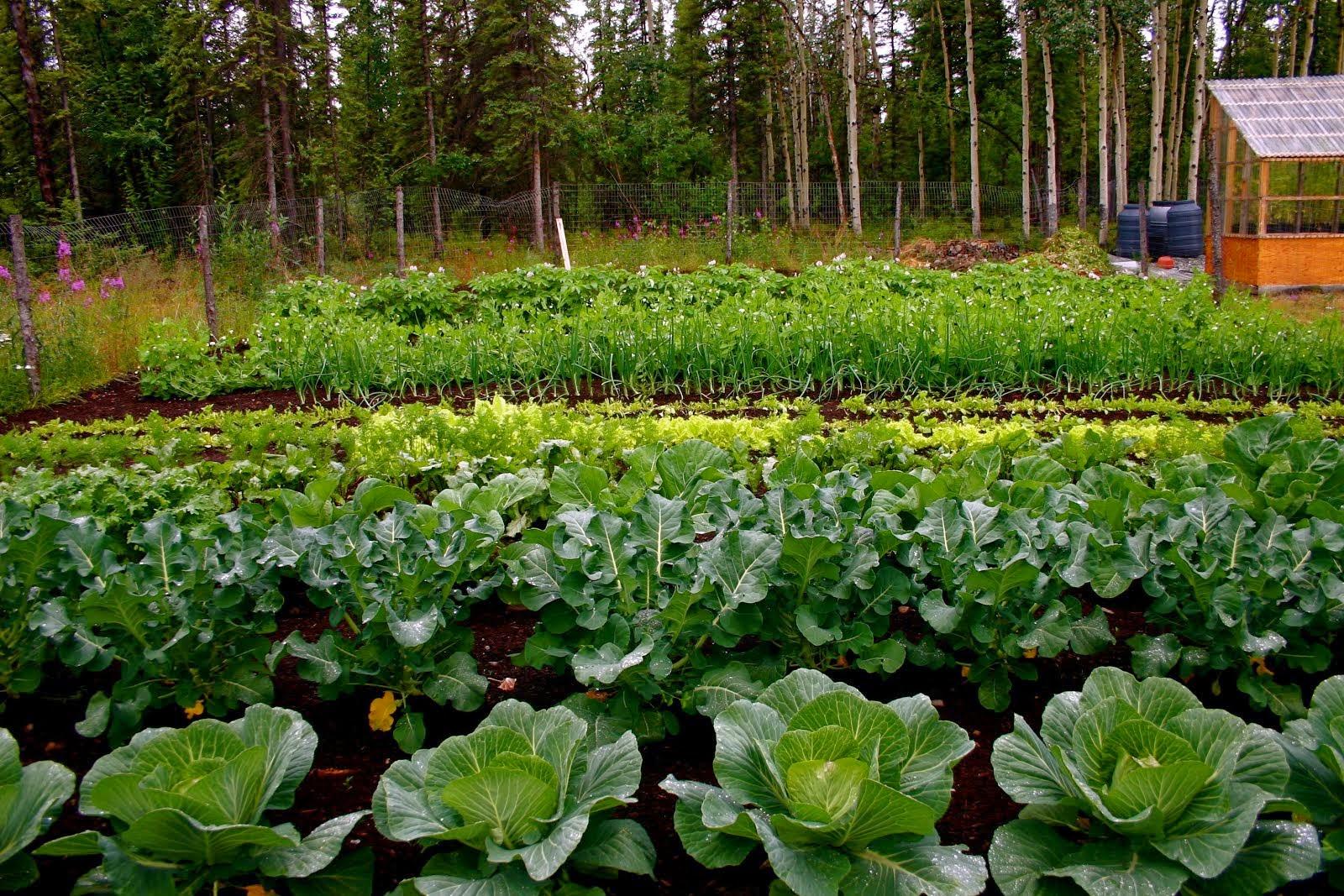 Alaska Farm & Garden Trail: Learn About Alaska's Arctic Gardens & Its Livestock