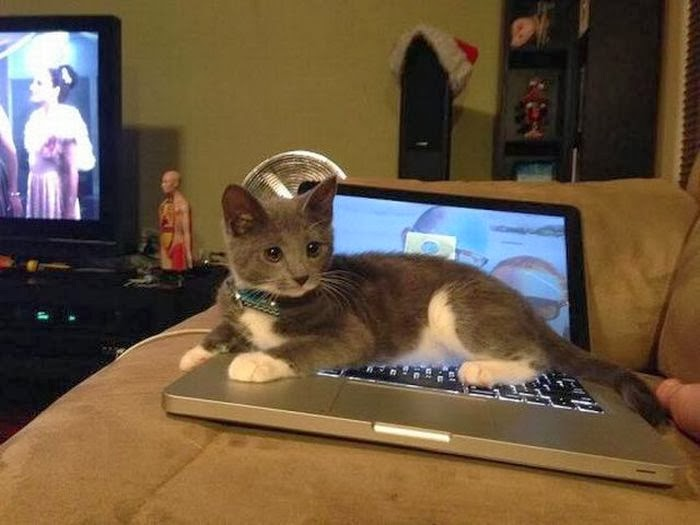 Funny cats - part 88 (40 pics + 10 gifs), beautiful kitten sits on a laptop