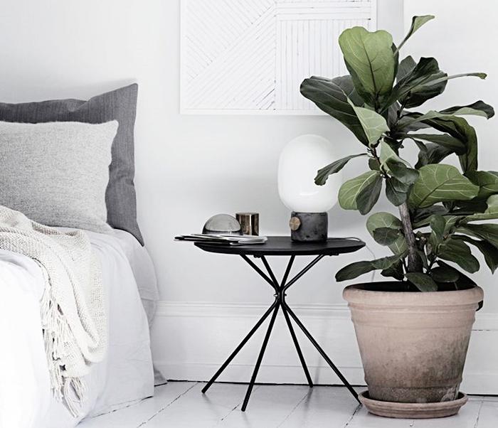 rośliny do sypialni, rośliny we wnetrzach, idealne rośliny do wnętrz