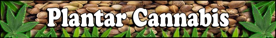 PLANTAR CANNABIS - Semillas de Cannabis