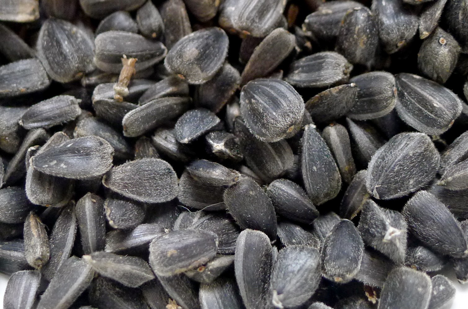 Sunseed sunflower Seeds
