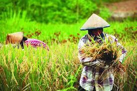 Informasi Lengkap Tentang Jurusan Agroekoteknologi