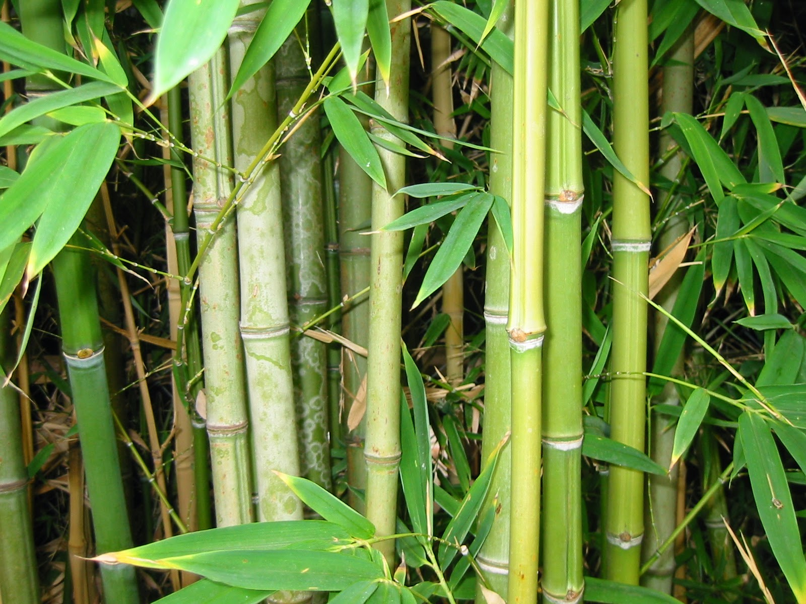 The benefits of bamboo clothing everything for eczema for What can you do with bamboo