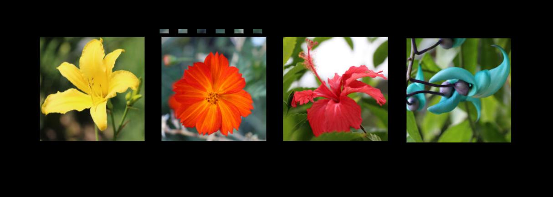 JotaV - Tirinha de filme com fotos e com sombra