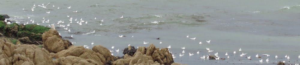 Les Mouette's naviguent, les moules restent accrochées aux rochers