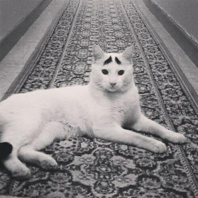 fotos Gato curioso com as sobrancelhas
