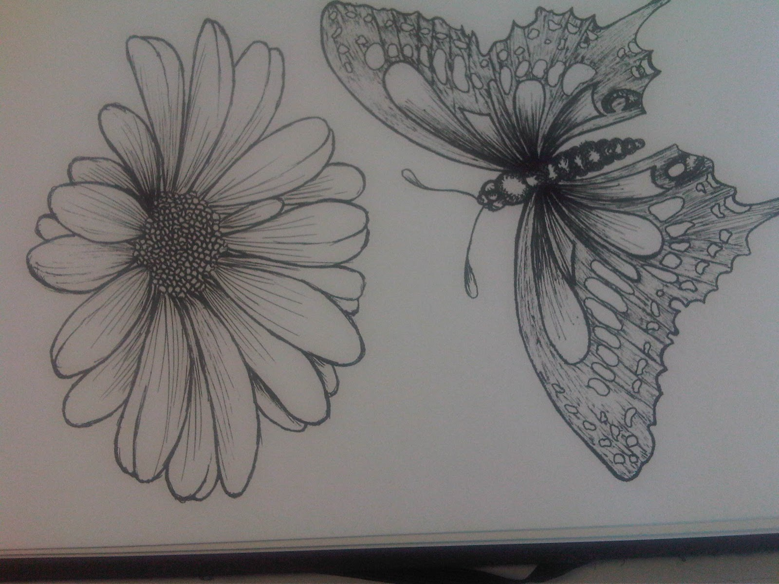 Butterfly On Flower Drawings In Pencil