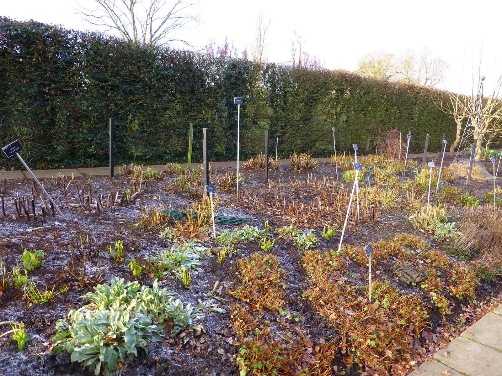Botaniquarium blog winter im rhs garten wisley for Piet oudolf pflanzen