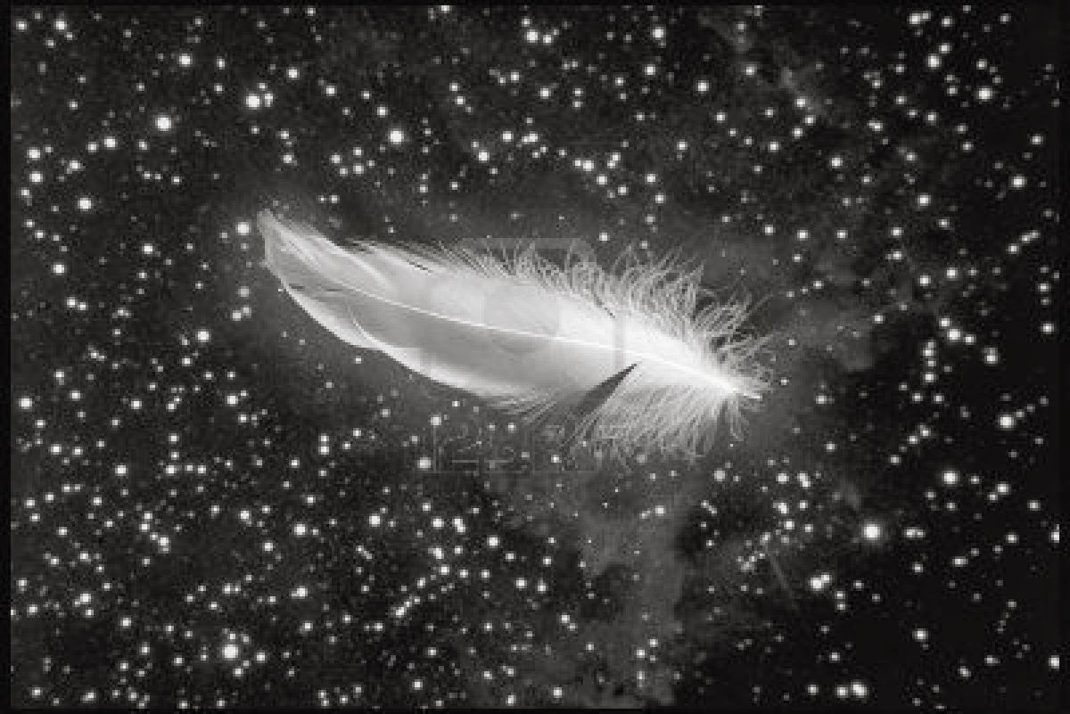 Feathers From Heaven Quotes White Feathers Signify Either