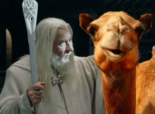 Gandalf and his camel