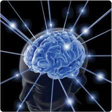 Human Brain And Memory