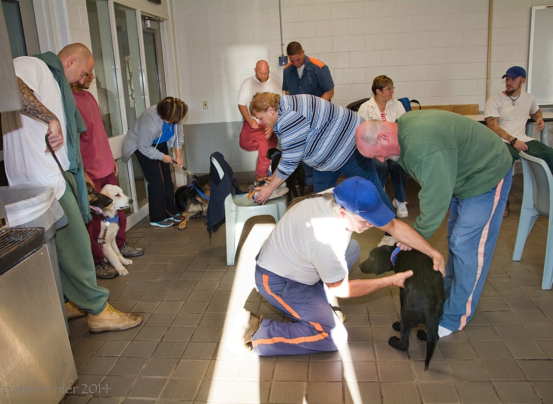 Two men in the foregrond are running their hands on a black lab puppy. The man on the left of the puppy is kneeling on the tile floor, he is wearing a white t-shirt and blue prison pants and a blue ball cap. the man on the right of the puppy is wearing a green sweatshirt and the blue prison pants, he is bent over at the waits over the puppy. There are two men and one woman along the wall on the far left side, standing with puppies, and three men and two women in the far background.