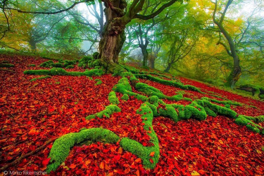 Speechless Nature Photography by Mirko Fikentscher