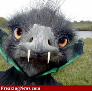 funny image collection very funny animal halloween pictures