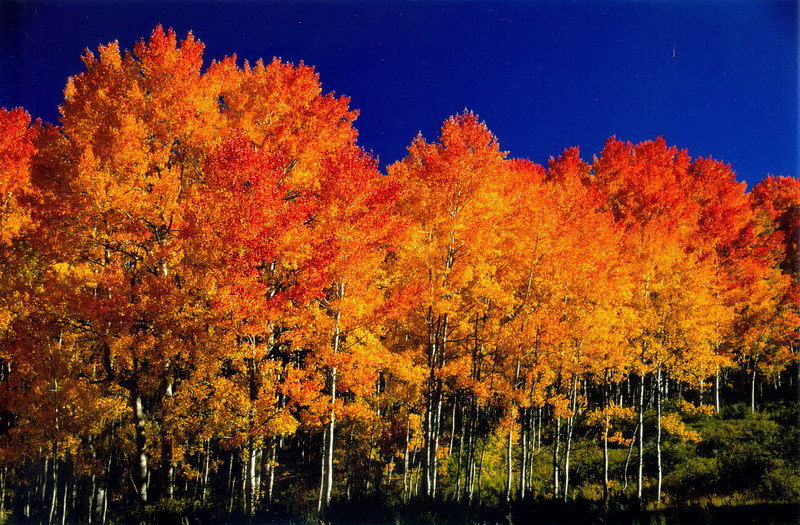 Aspen Tree's, something that truly makes northern Arizona special