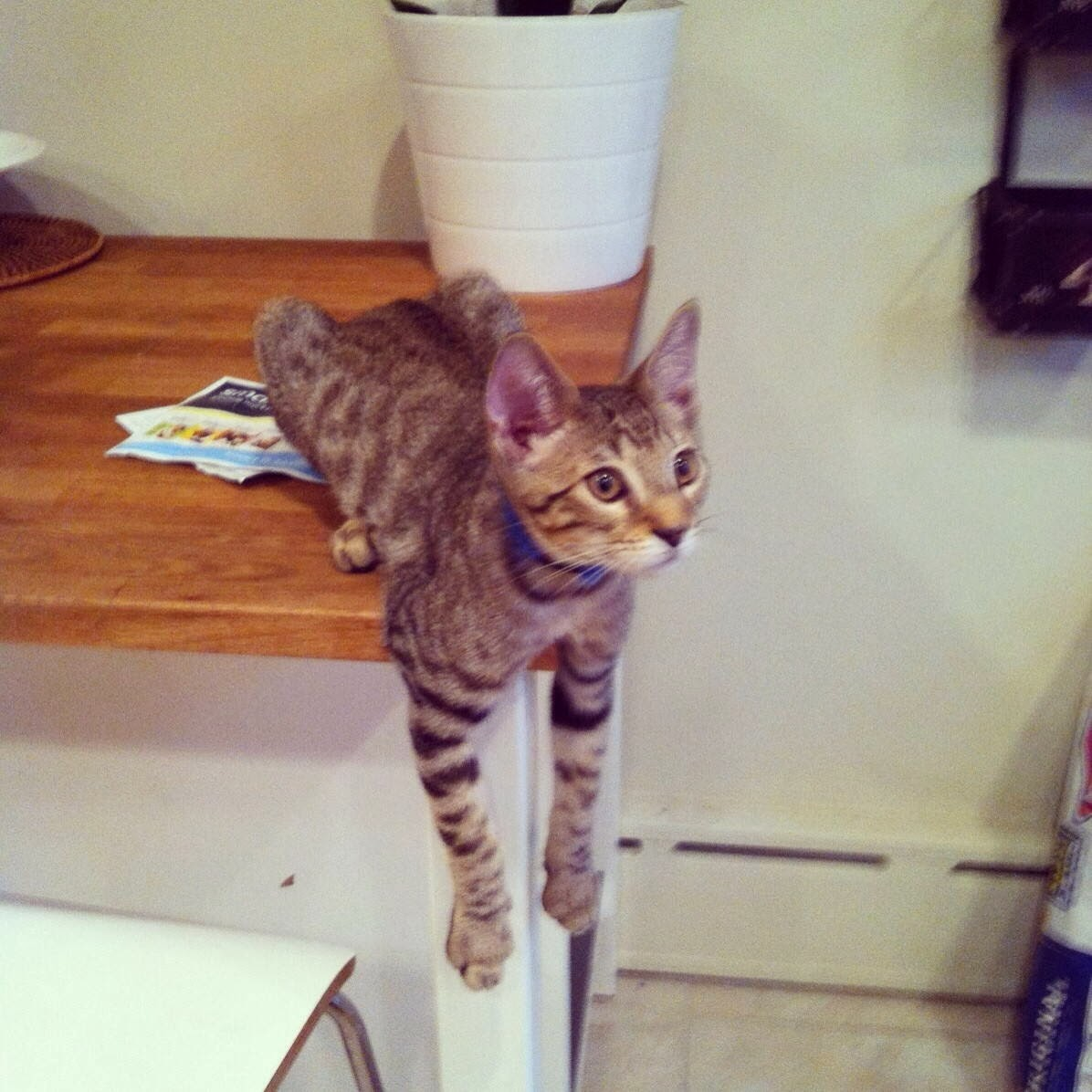 Funny cats - part 90 (40 pics + 10 gifs), cat lays at the edge of table