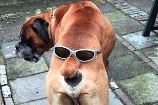 Perro chistoso