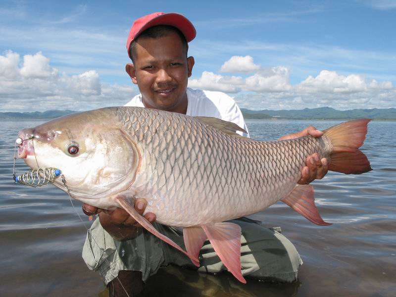 Big fishes of the world rohu labeo rohita for Largest saltwater fish
