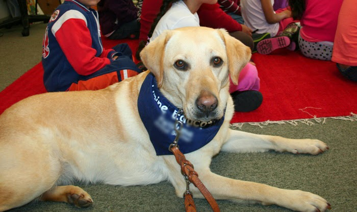 Cabana wearing a Canine Educator bandana, looking at the camera, as she lays next to a carpet full of sitting children