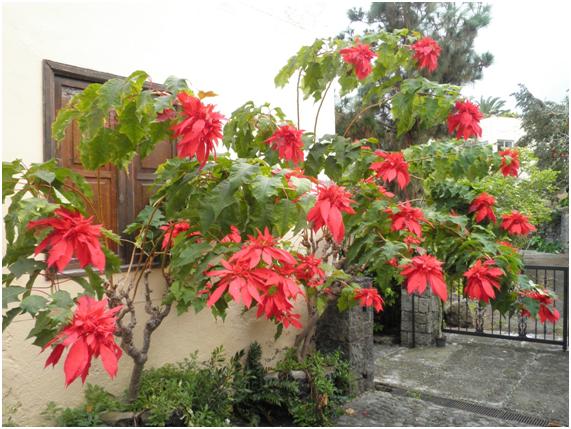 Plantas arom ticas en el jard n de bernadette i for Plantas aromaticas jardin