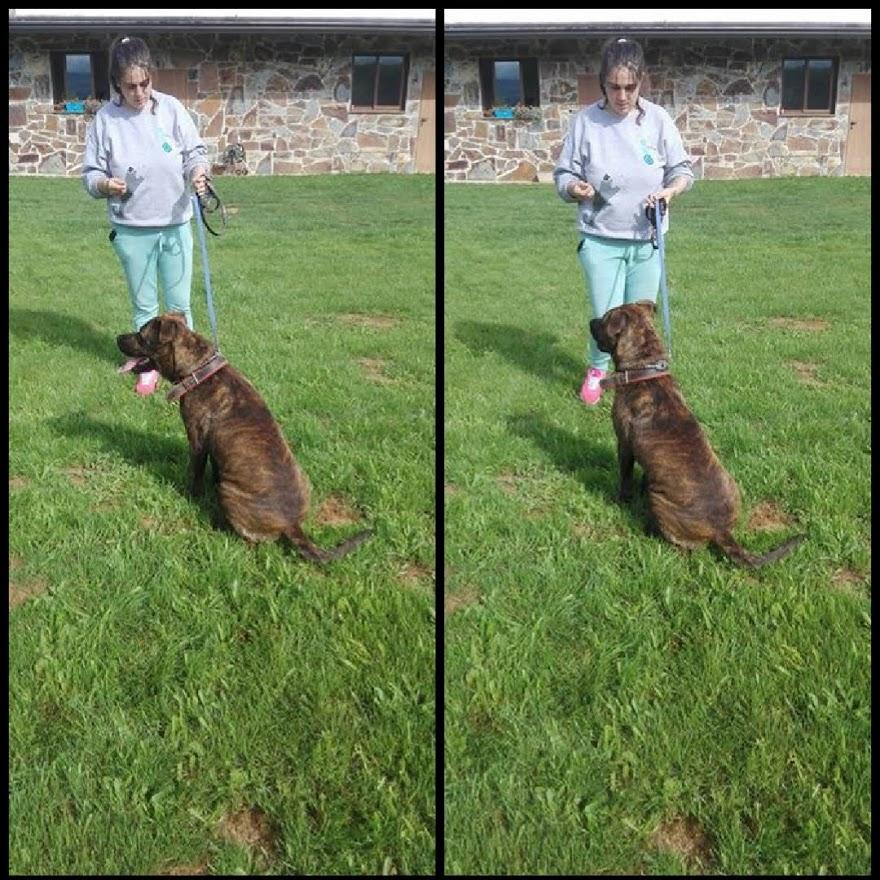 Turbo 13 meses y Nohemi, obediencia básica.