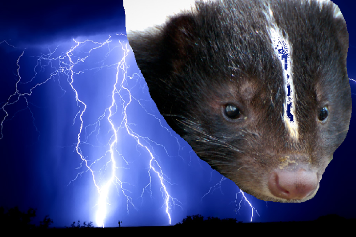 A skunk head in a sky of thunder