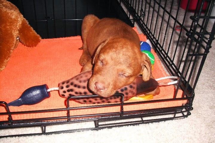 Trip as a puppy