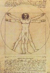 El hombre de Vitruvio, Homo Cuadratus o Las proporciones del hombre.