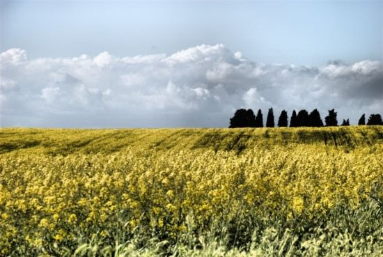 Foto del Giorno: Campagna romana di Claudio Fortunato