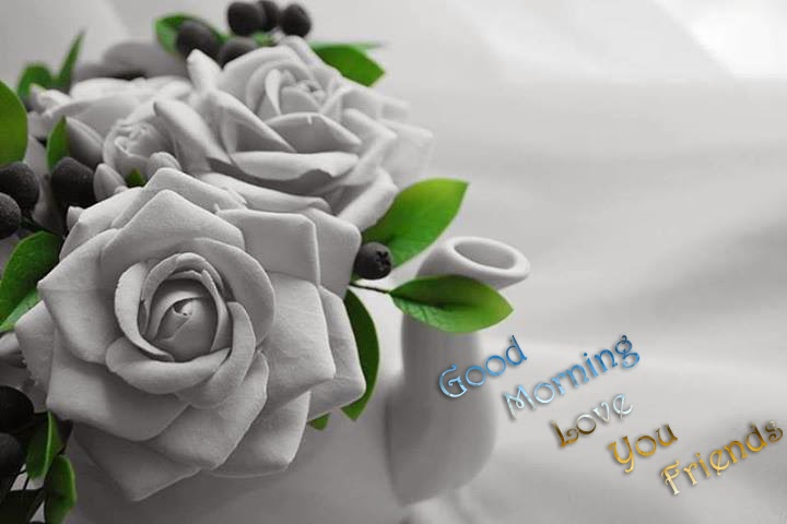 good morning with white rose