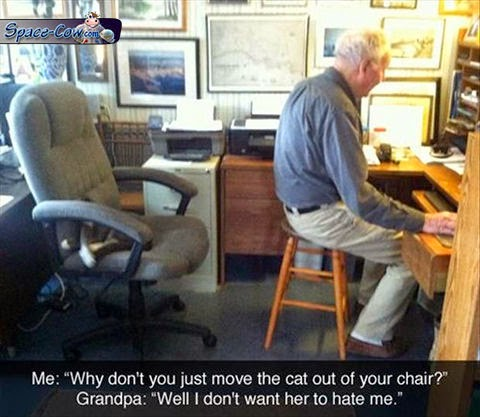 funny cat people humor