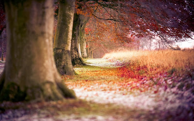 forest-trees-path-fallen-leaves-autumn-nature-photo-wallpaper-1920x1200