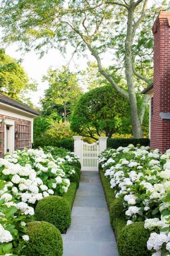 Front Yard Landscaping With Hydrangeas