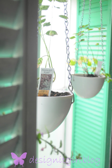 hanging planter, recycle, egg poacher, crafts, DIY