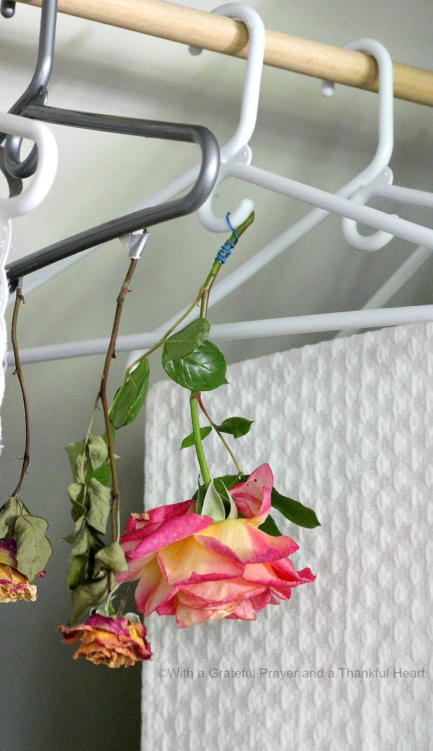 How to dry roses grateful prayer thankful heart theres nothing lovelier than fresh cut flowers gracing your table or brightening a place in your izmirmasajfo