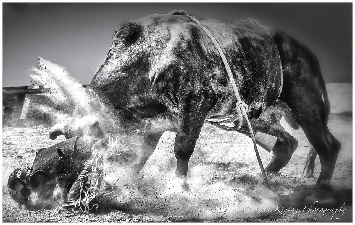 Bull Impact